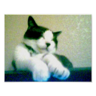 snowshoe cute laid back kitty poster