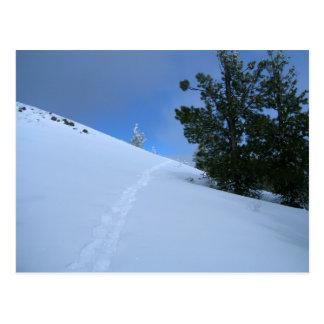 Snowshoe Prints Postcard