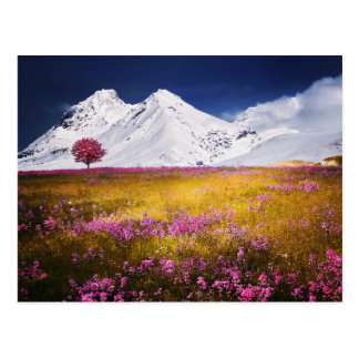 Snowy Alps Postcard