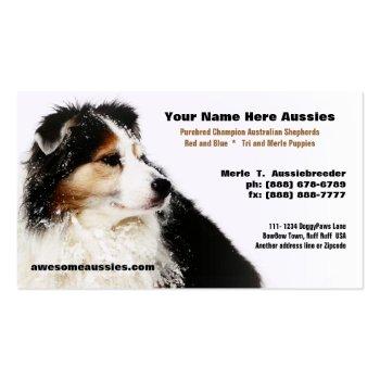 Snowy Australian Shepherd Breeder Business Cards