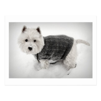 snowy barko in sweater postcard