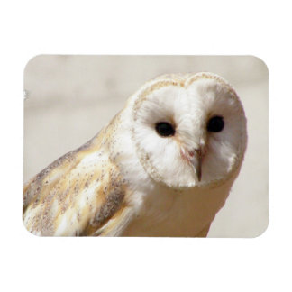 Snowy Barn Owl  Flexible Magnet