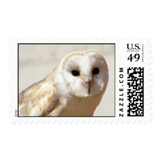 Snowy Barn Owl Postage Stamp