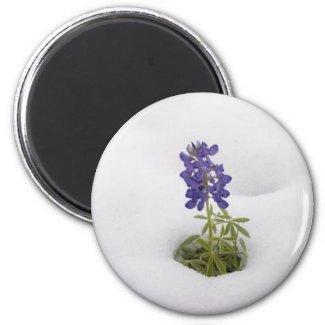 Snowy Bluebonnet - magnet magnet
