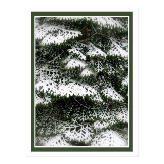 Snowy Bows Postcard