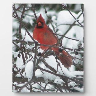 Snowy Cardinal Display Plaque