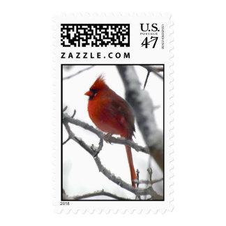Snowy Cardinal Postage