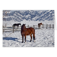 Snowy Christmas Horses In Bozeman Card