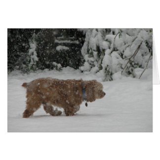 Snowy Cocker Spaniel Card