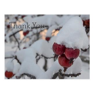 Snowy Crab Apple Thank You Postcard