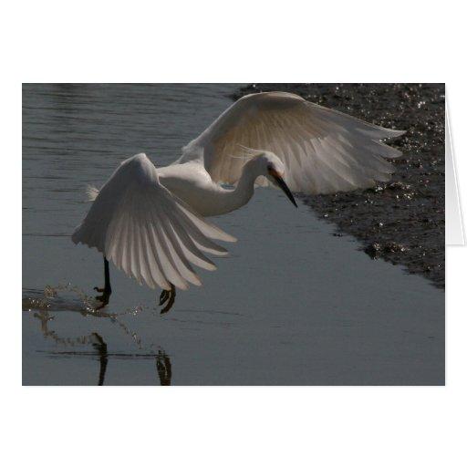 Snowy Egret! Card