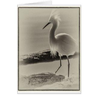 Snowy Egret Card