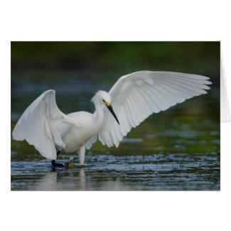 Snowy Egret (Egretta thula) Cards