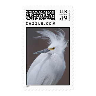 Snowy Egret (Egretta thula) Postage Stamp