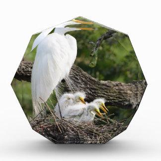 Snowy Egret Family Acrylic Award
