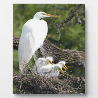 Snowy Egret Family Plaque