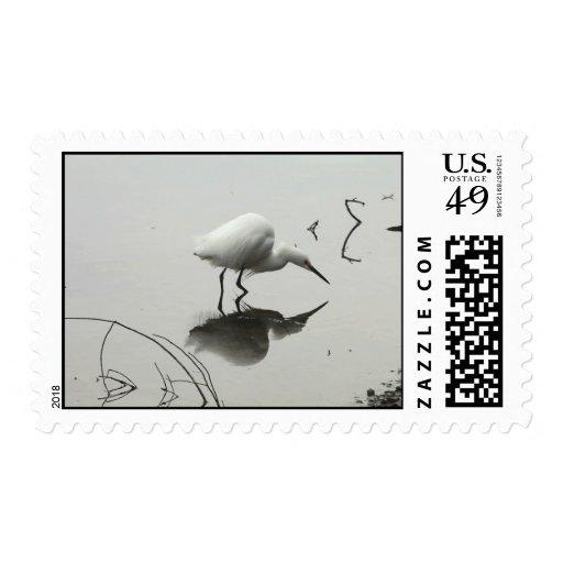 snowy egret fishing postage stamp