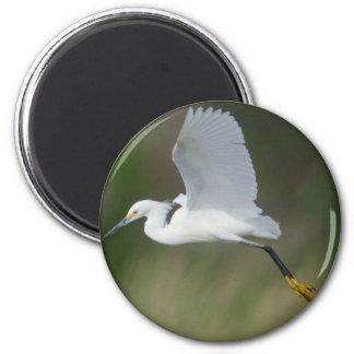 Snowy Egret flying Magnet