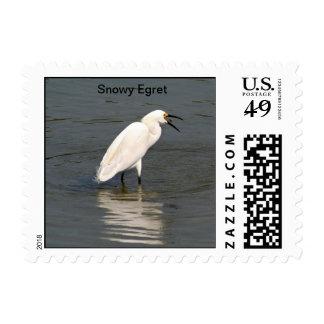 Snowy Egret Foraging Postage