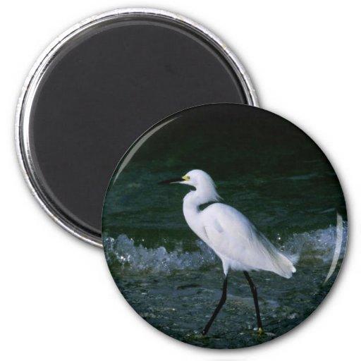 Snowy Egret Fridge Magnet