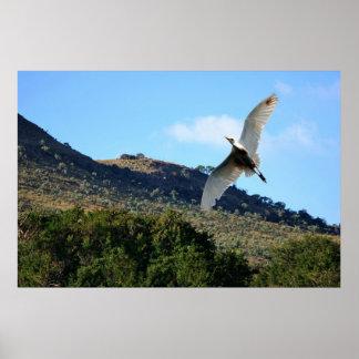 Snowy egret in flight posters
