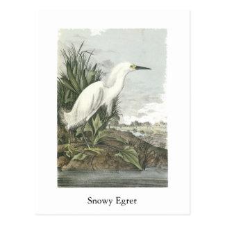 Snowy Egret, John Audubon Postcard