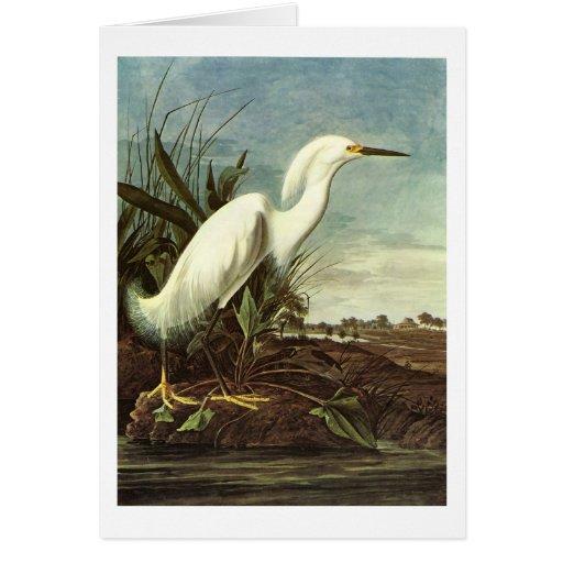 Snowy Egret, John James Audubon Card