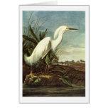 Snowy Egret, John James Audubon Greeting Cards