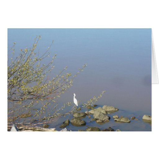 Snowy Egret on the bank of the Sacramento River Card