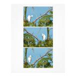 Snowy Egret Personalized Letterhead