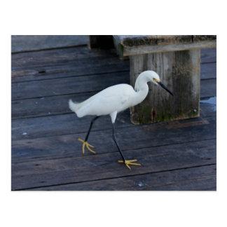 Snowy Egret Postcard