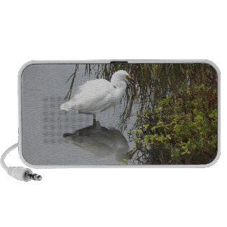 Snowy Egret w/ Huge Fish Doodle Speaker