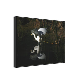 Snowy Egret Wrapped Canvas