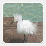 Snowy Egrets Stickers