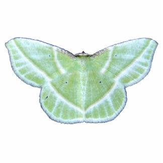Snowy Emerald moth ~ acrylic Cutout