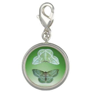 Snowy Emerald moth ~ Charm
