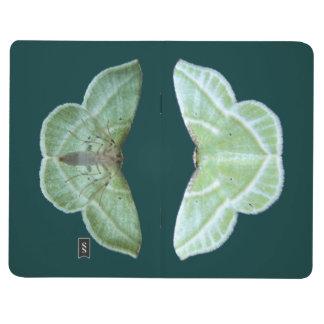 Snowy Emerald moth ~ Journal