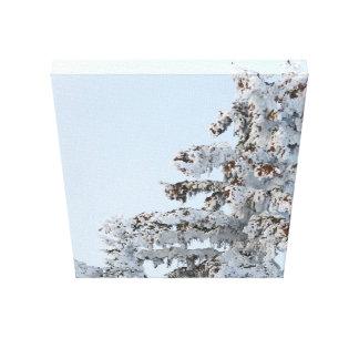 snowy evergreen art photo canvas print
