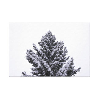 Snowy Evergreen Canvas Print