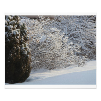 Snowy Evergreen Tree and Bushes PHOTO ENLARGEMENT
