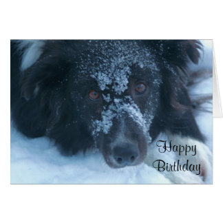 Snowy Faced Border Collie Cute Birthday Card