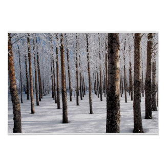 Snowy Fairy Tale Forest Poster