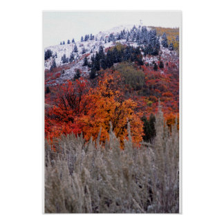 Snowy Fall Colors Poster