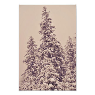 Snowy firs photographic print