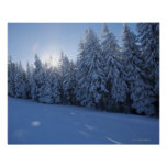 snowy forest in the mountain poster