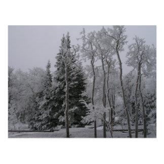 Snowy Forest Postcard