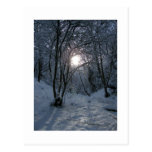 Snowy Forest Trail Postcards