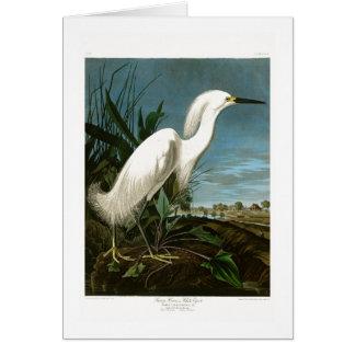 Snowy Heron White Egret Audubon Birds of America Card
