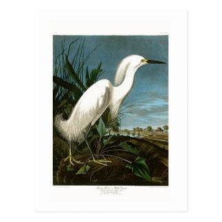 Snowy Heron White Egret Audubon Birds of America Postcard