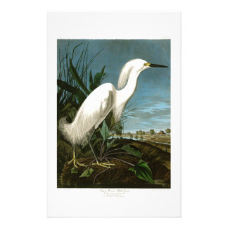 Snowy Heron White Egret Audubon Birds of America Stationery